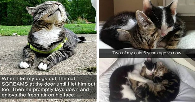 cats snaps cat snapchat, funny, lol, aww, cute, adorable, humor, silly, animals, wholesome | let my dogs out cat SCREAMS at door until let him out too. Then he promptly lays down and enjoys fresh air on his face. | Two my cats 6 years ago vs now