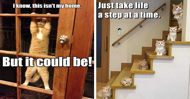 "original cat memes by i can has cheezburger users lolcats - thumbnail of cat on door ""I know this isn't my home. But it could be!"" and cats sitting on stairs ""just take life a step at a time"""