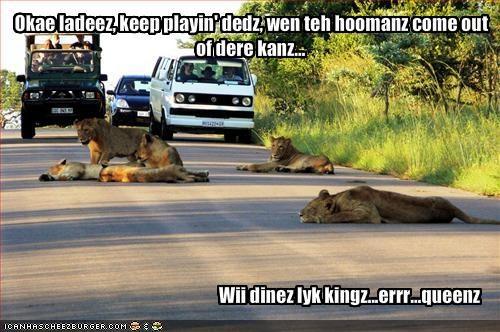 Cheezburger Image 1262703360