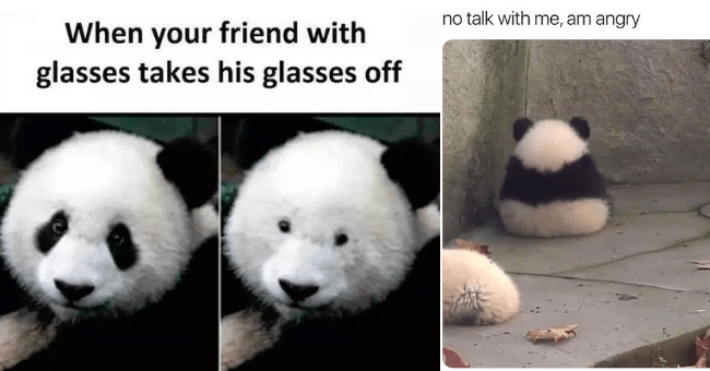 collection of panda memes thumbnail includes two pictures including one of a panda sitting with its back to the camera looking all sad 'Panda - no talk with me, am angry' and another of a panda bear next to the same panda bear but without the black around its eyes 'Nose - When your friend with glasses takes his glasses off'