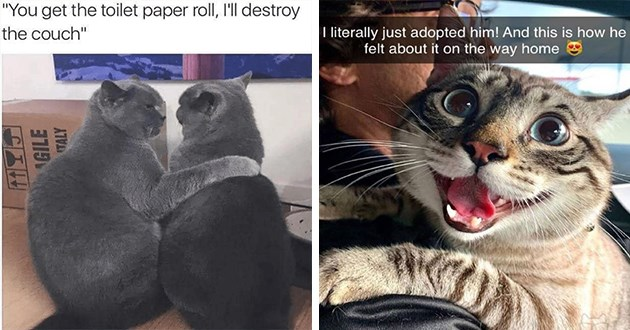 newest and hottest cat memes for caturday - thumbnail includes two images one of two cats planning to destroy things and one of a cat who was just adopted and super happy about it | get toilet paper roll, l'll destroy couch | literally just adopted him! And this is he felt about on way home