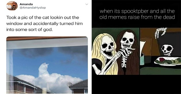 week's best top and funniest animal memes - thumbnail includes two images one of cat in clouds looking like god and one of woman yelling at cat but the skeleton version | Amanda @AmandaHyslop Took pic cat lookin out window and accidentally turned him into some sort god | its spooktpber and all old memes raise dead