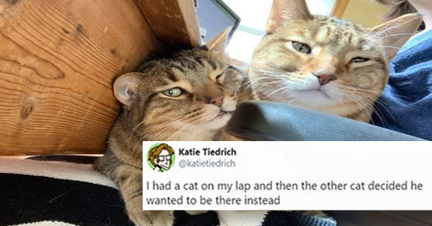 cute and funny tweets all about cats and dogs - thumbnail | Katie Tiedrich @katietiedrich had cat on my lap and then other cat decided he wanted be there instead