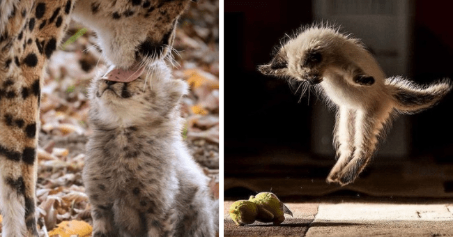 collection of pictures that are worth more than 1000 words thumbnail includes two pictures including a cat jumping in the air elegantly and another of a cheetah licking the head of a baby cheetah