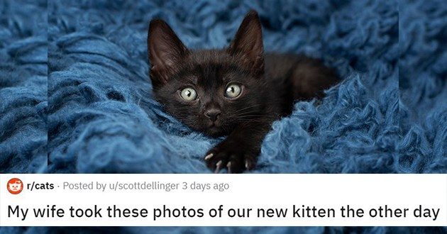 series of photos of tiny black kitten being swaddled in purrito - thumbnail of kitten with tiny murder mittens | My wife took these photos of our new kitten the other day