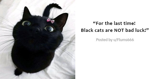 "medley of cute, funny cats - thumbnail of cute balck cat with tiny pink bow ""for the last time, black cats are NOT bad luck"""