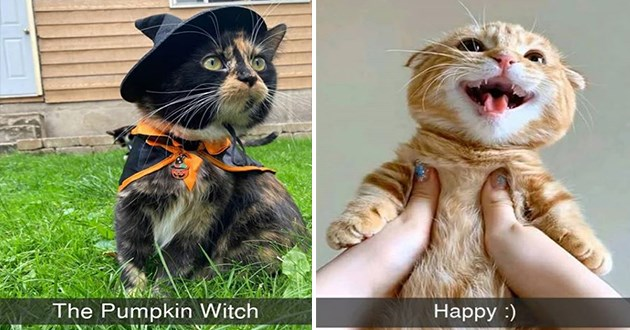 "cat snapchats - thumbnail includes two images one of cat dressed as a witch ""the pumpkin witch"" and one of orange cat smiling all big Happy"