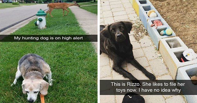 cute and funny dog snapchats - thumbnail includes two images one of hunting dog on full alert as a deer walks by in the background and one of a dog who likes to file her toys | This is Rizzo. She likes file her toys now have no idea why