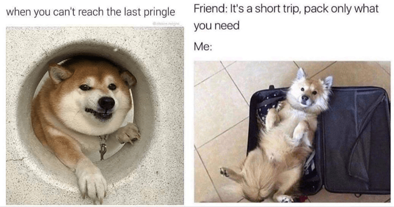 collection of dog memes thumbnail includes two pictures including a dog reaching its paw through some hole 'Dog - when you can't reach the last pringle ehinon reign' and a dog lying in a suitcase 'Pomeranian - Friend: It's a short trip pack only what you need Me:'