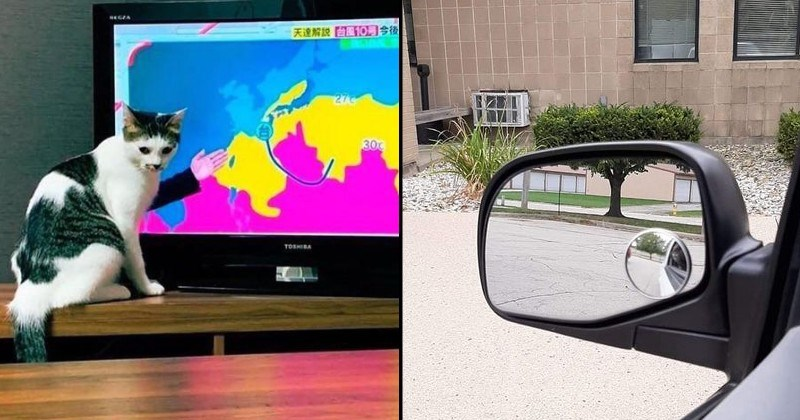 Funny and interesting images of weird perspective | cat sitting in front of a TV screen during a weather forecast report looking as if it has a human hand | reflection in side view car mirror perfectly aligned with the background