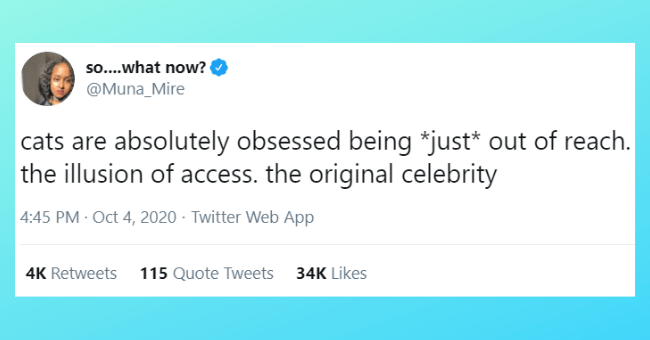 a collection of this week's best cat tweets thumbnail includes one tweet 'Text - so...what now? @Muna_Mire cats are absolutely obsessed being *just* out of reach. the illusion of access. the original celebrity 4:45 PM - Oct 4, 2020 - Twitter Web App 4K Retweets 115 Quote Tweets 34K Likes'