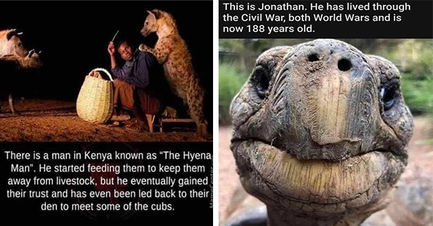 mini gallery of wholesome stories, memes, and tweets - thumbnail of man who befriended hyenas and Jonathan the 188 year old turtle | 5 positive-memes Follow There is man Kenya known as Hyena Man He started feeding them keep them away livestock, but he eventually gained their trust and has even been led back their den meet some cubs. WHOLESOME CONTENT can give up hyena man? lionesshathor Follow There is similar story man who drives water truck game reserve on Africa. There is man-made watering