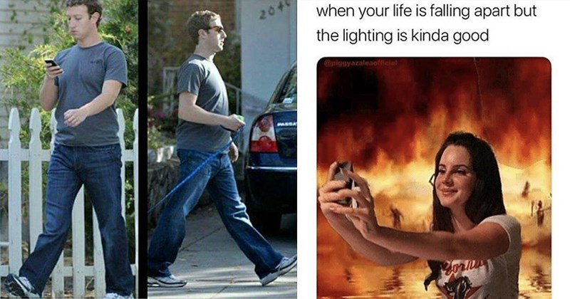 Dank Memes, Funny Memes, Good Memes, Jokes, 2020 Memes, Hilarious Memes | Mark Zuckerberg Like many enjoy perambulating about on my human legs while performing ordinary activities, such as observing my phone or towing my dog with rope. Although many humans will only bend their knees forward mechanically forced do so find perambulation this fashion increases speed and efficiency by significant | life is falling apart but lighting is kinda good @piggyazaleaofficial Lana Del Rey taking a selfie