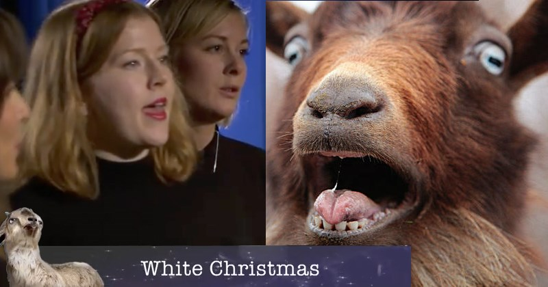 carols,christmas,wtf,list,goats