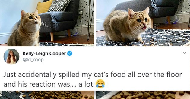 "cat's reaction to spilled food goes viral on Twitter - thumbnail of cat's reaction to spilled food ""just accidentally spilled my cat's food all over the floor and his reaction was.... a lot"""