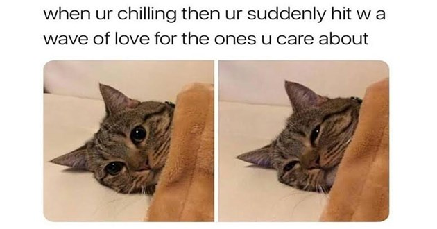 "wholesome adorable animal memes to uplifting spirits - thumbnail includes two images of the same cat under a blanket ""when ur chilling then suddenly hit w a wave of love for the ones u care about"""