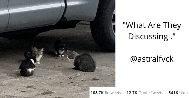 best and most popular animal tweets of the week thumbnail includes a picture of cats gathered in a circle next to a car 'Cat - @astralfvck What Are They Discussing . 5:50 AM - Oct 7, 2020 - Twitter for iPhone 108.5K Retweets 12.7K Quote Tweets 540.3K Likes >'