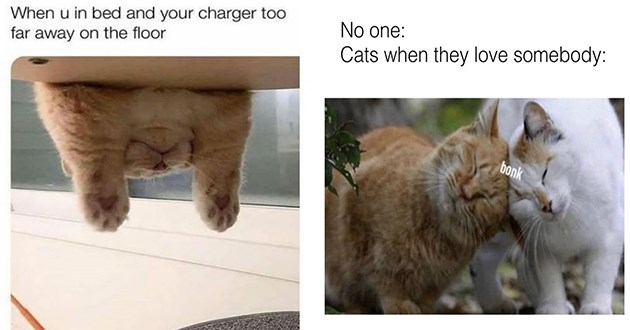 """good sized dump of fresh new cat memes - thumbnail includes two memes, one of cat hang over bed """"when u in bed and your charger too far away on the floor"""" and one of two cats bonking heads """"no one: cats when they love somebody:"""""""