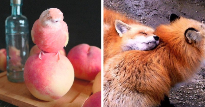 collection of pictures that are worth more than 1000 words thumbnail includes two pictures including one of a pink bird standing on a pink peach and another of a fox laying its head on another fox