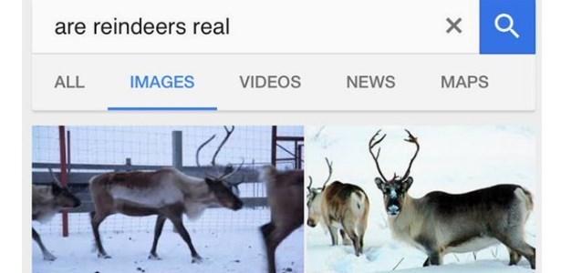 twitter real reindeer - 1270789