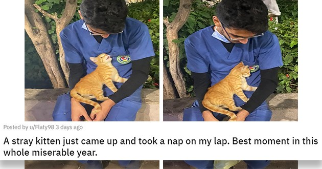 "pics and vids of the cutest animals of the week - thumbnail of man with a stray kitten ""A stray kitten just came up and took a nap on my lap. Best moment in this whole miserable year."""
