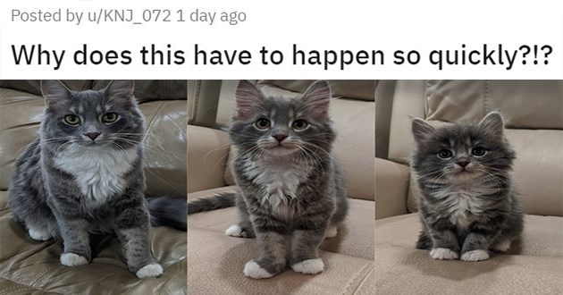 "cat medley filled with cuteness, laughs, and mourning and loss - thumbnail of a cat glow up ""why does this have to happen so quickly?!?"""