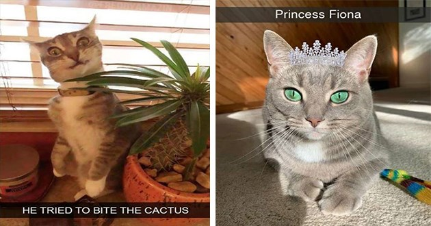 "cat snapchats - thumbnail includes two images ""he tried to bite the cactus"" cat looking confused next to a plant and ""princess fiona"" pretty cat in a crown tiara"
