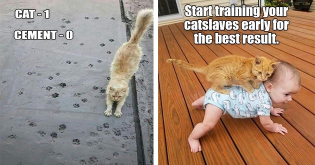 "original cat memes by i can has cheezburger users lolcats - thumbnail includes two images ""cat - 1 cement - 0"" ""start training your catslaves early for the best result"" cat riding a crawling baby's back"