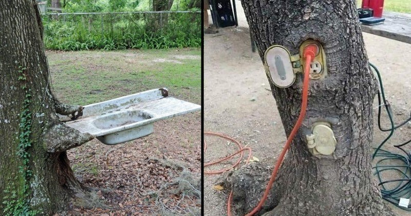 trees eating and enveloping things | electric sockets engulfed by a tree trunk | sink sticking out of a tree