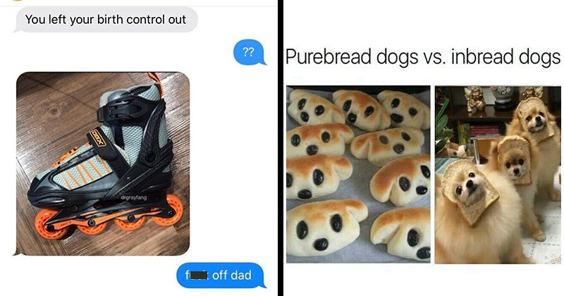 Funny Memes, Dank Memes, Absurd Memes, Random Memes, Stupid Puns, Funny Comments | left birth control out fuck off dad rollerblades | Purebread dogs vs. inbread dogs sweetkaratemoves bread in the shape of dogs and actual dogs wearing slices of bread over their faces