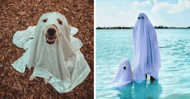 pictures of dogs with sheets over their heads looking like ghosts thumbnail includes two pictures including a happy dog covered with a sheet looking up at the camera and another of a dog and a human both covered with sheets in the ocean