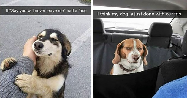 "cute and funny dog snapchats - thumbnail includes two images one of sweet dog hugging human ""if say you will never leave me had a face"" and one of an annoyed-looking dog ""I think my dog is just done with our trip"""