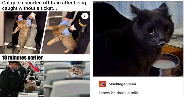 """newest and hottest cat memes for caturday - thumbnail includes two images one of cat getting escorting off a train Cat gets escorted off train after being caught without ticket 10 minutes earlier hadymome0 and a cat with a milk mustache """"i know he drank a milk"""""""
