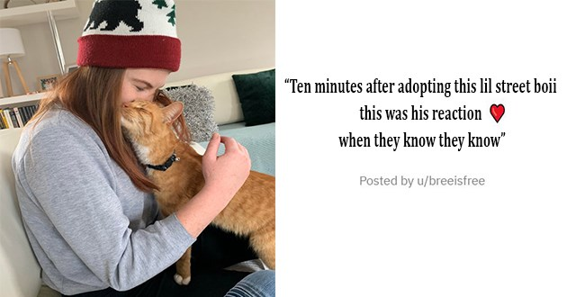 "all the newly adopted rescue animals of the week - thumbnail of girl and newly adopted cat ""Ten minutes after adopting this lil street boii this was his reaction when they know they know"""