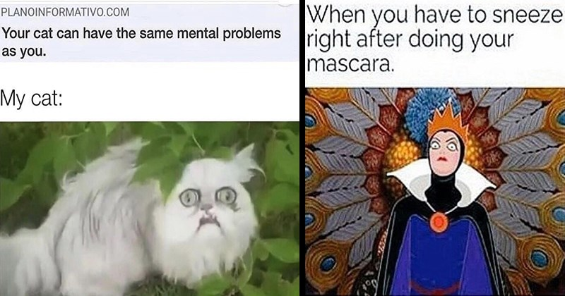 Funny Memes, Dank Memes, Dumb Memes, Random, Witty Jokes, Puns, Relatable Memes | PLANOINFORMATIVO.COM cat can have same mental problems as My cat: scary persian cat | have sneeze right after doing mascara. Snow white evil queen