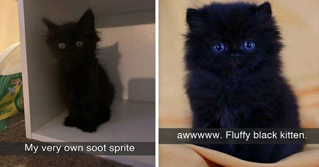 snaps, videos, and pictures of black cats - thumbnail includes two images one of | My very own soot sprite | awwwww. Fluffy black kitten.