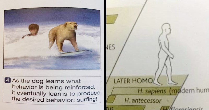 Funny Memes, Weird Pictures, Novelty, Illustration, Science, Funny Tweets | As dog learns behavior is being reinforced eventually learns produce desired behavior: surfing! | LATER HOMO H. sapiens (mødern huma H. antecessor ctus kloresiensis