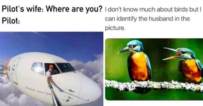 memes celebrating wives being superior to husbands | Pilot's wife: Where are Pilot: taking selfie from airplane | don't know much about birds but can identify husband picture. bird yelling at another bird