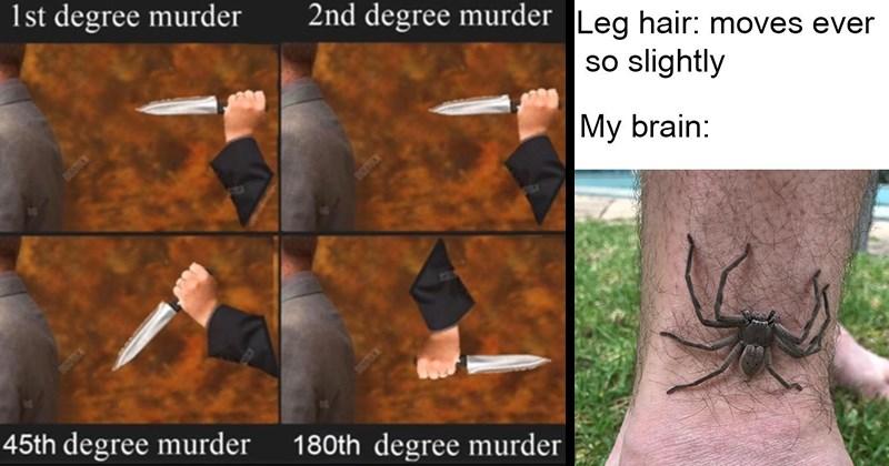 Funny Memes, Stupid Memes, Random Memes, Relatable Memes | 1st degree murder 2nd degree murder DOSTRCN DOTOE 72 45th degree murder DOSTOCK 180th degree murder | Leg hair: moves ever so slightly My brain: spider