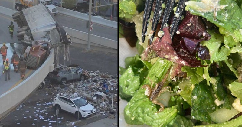 messes, mistakes and failures | garbage truck flipped over the side of a bridge spilling its content on cars underneath | bug found in a green salad
