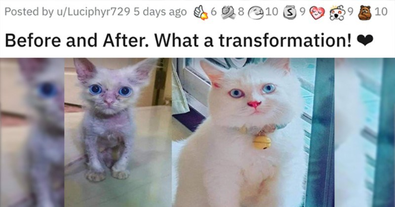 list of animals before and after they were adopted - thumbnail of the glow up of one beautiful cat What a transformation