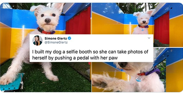 "adorable dog takes selfies in custom built photo booth - thumbnail of dog selfies ""I built my dog a selfie booth so she can take photos of herself by pushing a pedal with her paw"""