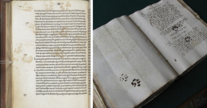 twitter thread plus tweets of cats leaving their paw prints in important places throughout history thumbnail includes two pictures of two different open books with cat paw prints on them