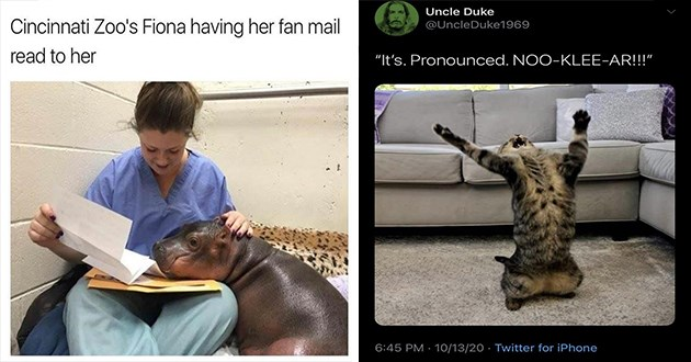 "humble gathering of the newest and hottest memes and tweets for a midweek dump - thumbnail includes one meme of fiona the hippo having her fan mail read to her and one tweet of a cat ""Its. Pronounced. NOO-KLEE-AR!!!"""