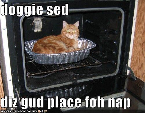 Cheezburger Image 1276520192
