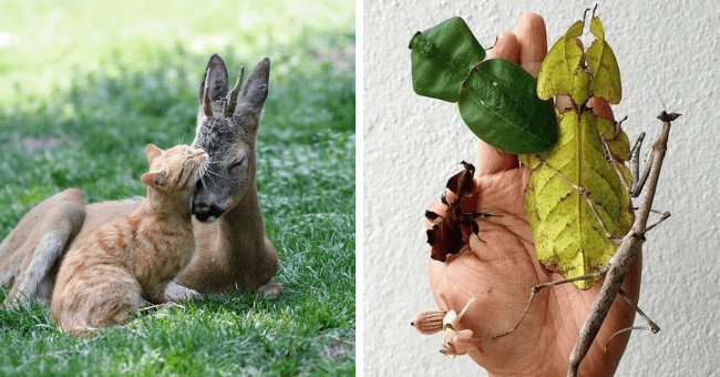 collection of pictures worth more than 1000 words thumbnail includes two pictures including a deer and a cat snuggling and another of someone's hand covered in insects that look like leaves