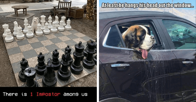 collection of dog memes thumbnail includes two pictures including one of a huge chess board and a white dog standing in place of the king 'Indoor games and sports - There is 1 Impostor amon9 us' and another of a dog sticking its head out of a car with spit marks on it 'Vehicle door - At least he hangs his head outthe window.'
