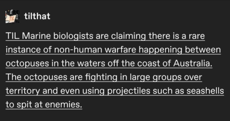 "A funny Tumblr thread about how insane octopi are | tilthat TIL Marine biologists are claiming there is rare instance non-human warfare happening between octopuses waters off coast Australia octopuses are fighting large groups over territory and even using projectiles such as seashells spit at enemies. via reddit.com pain-and-missouri Octopi are intense bransrath prefer octopedes celticpyro ""Animals don't go war because they're cinnamon rolls unlike ebil humans uwu"" Check-fucking-mate Linda,"