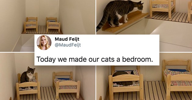 """twitter thread of cats sleeping in tiny IKEA bed - thumbnail includes four images of a cat walking up to its new bedroom complete with two tiny beds""""today we made our cats a bedroom"""""""