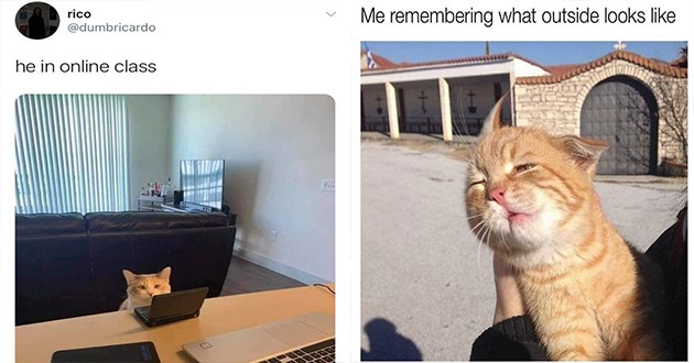"fresh cat memes every caturday - thumbnail includes two memes one of a cat with tiny laptop ""he in online class"" and one of orange class outside ""me remembering what outside looks like"""